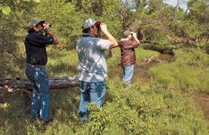 """Big Year"" is an informal competition to see who can observe the most bird species in Kansas."