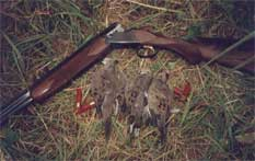 For a wing-shooter, a good dove shoot with his favorite shotgun can be very rewarding.