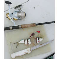 A piece of threadfin herring rigged on a jig head is redfish candy.